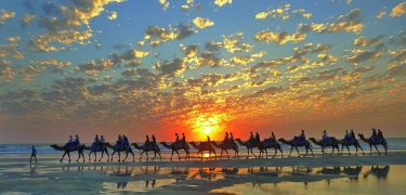The Kimberley Collection Cable Beach camels