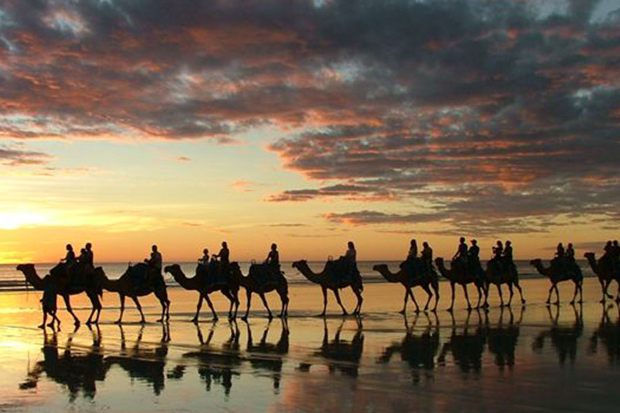 Sunset Camel Safari