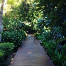 The Billi garden